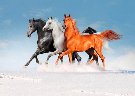 масть лошадей