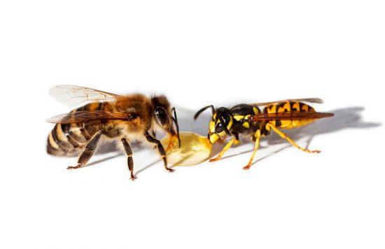 о жизни пчел