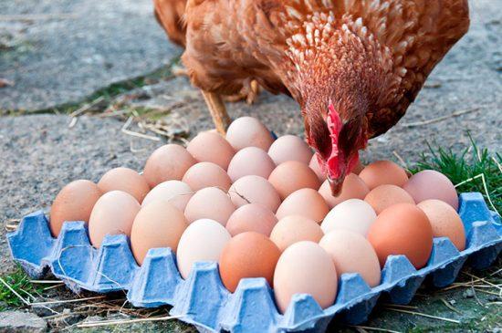 размер яиц