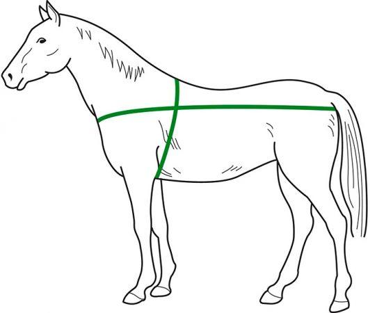 земеры лошади