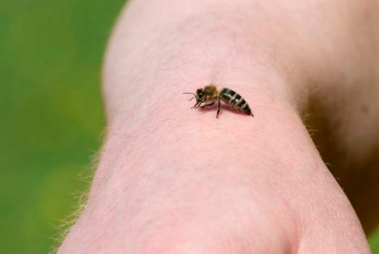 как кусает пчела