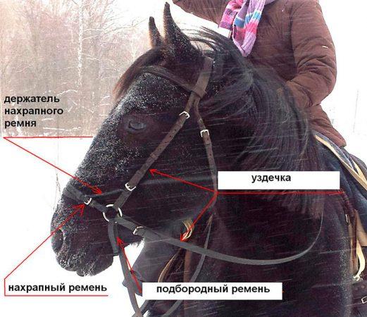 сбруя для лошади