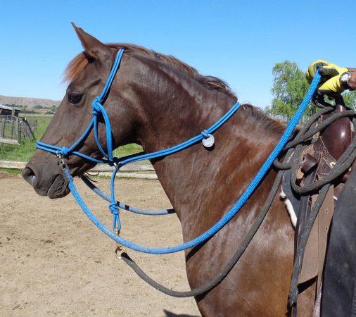 конь в узде