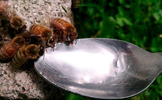 как кормить пчел