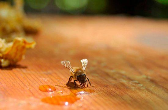 что едят пчелы