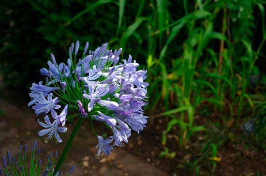 уход за садовыми цветами