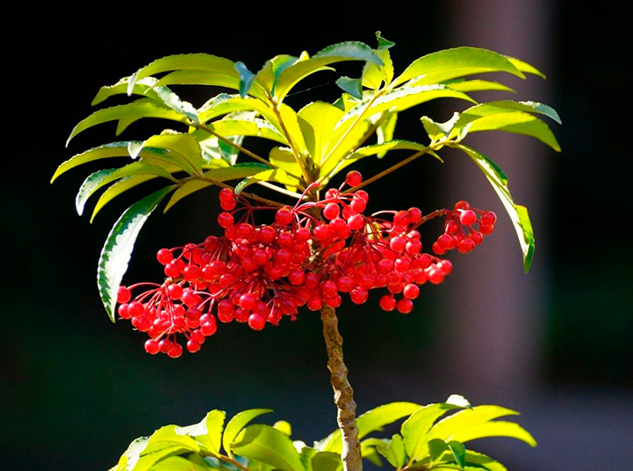 красивый цветок на подоконнике
