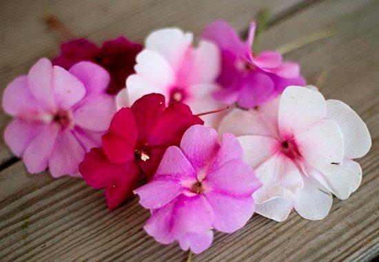 цветущие растения