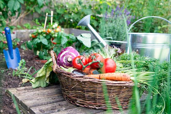 домашние овощи