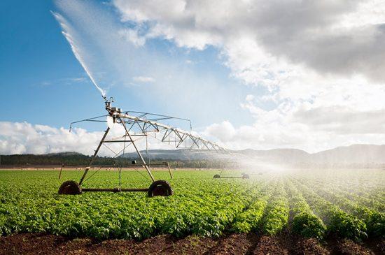 полив овощного поля
