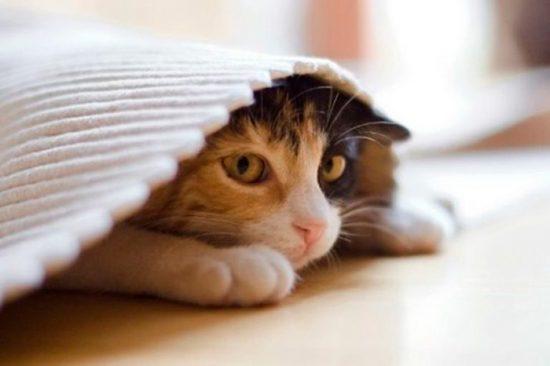 лекарства для кошек