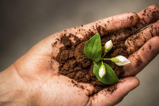 польза кофе для огорода
