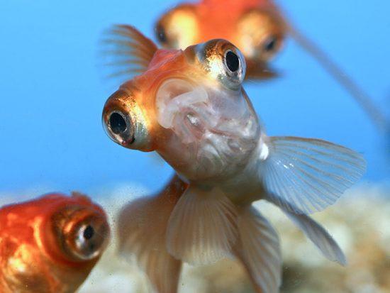 антисептик для аквариума