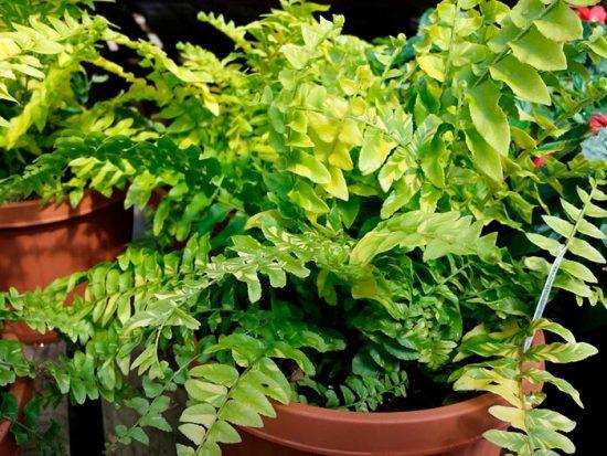 как выращивать экзотические растения