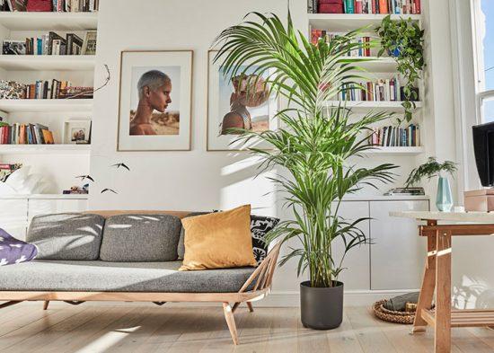 пальма в интерьере