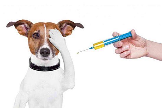 инъекции для собак