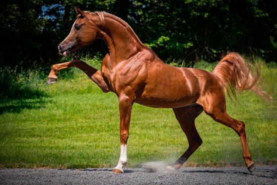 содержание коней