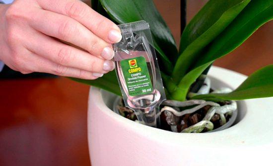 внесение подкормки под орхидею