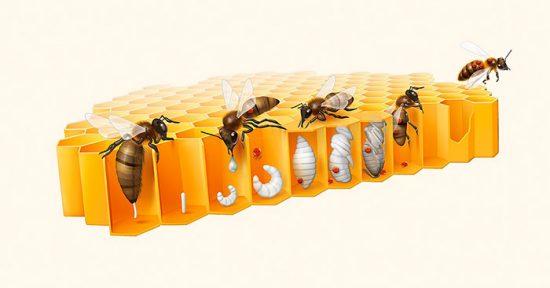 заражение пчелиных сот