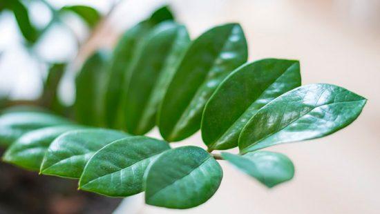 приметы о домашних растениях