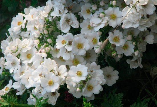 виды цветов в саду