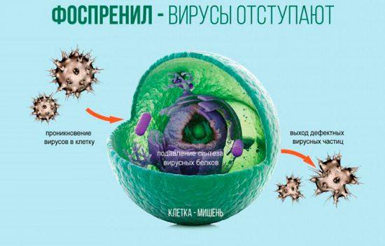 как действует противовирусный препарат