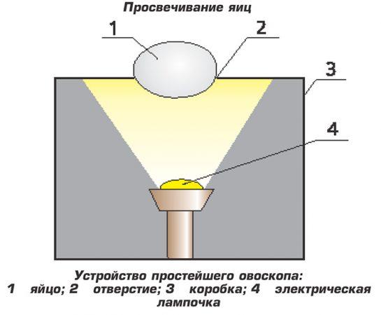 как просветить яйцо