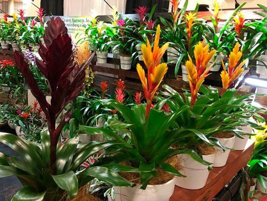 экзотические цветы дома