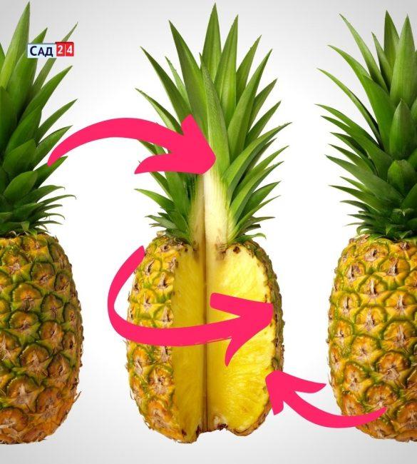 Каким должен быть ананас