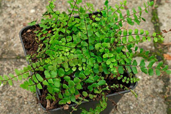 сорта растений