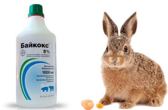 лечение кроликов