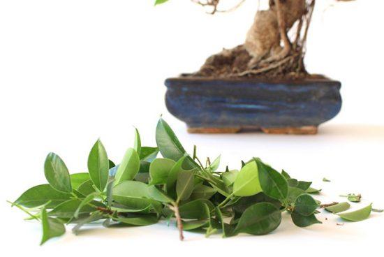уход за растениями дома