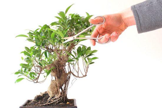 обрезка растений