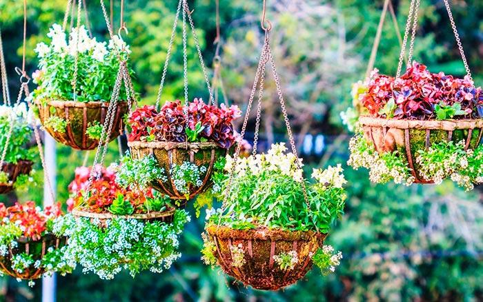 кашпо для овощных культур