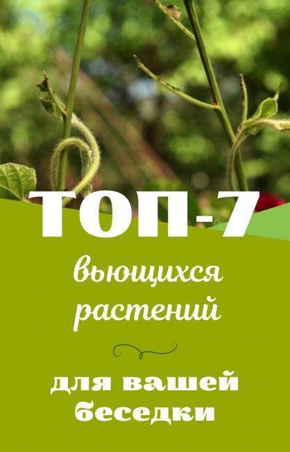 ТОП-7 оригинальных вьющихся растений