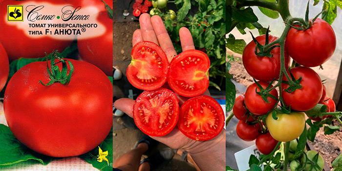 томат для холодных районов