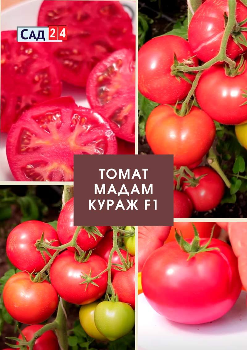 Томат-Мадам-Кураж-F1