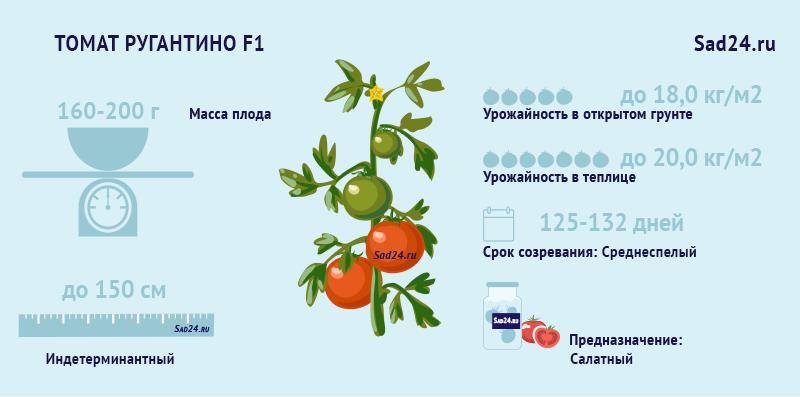 томат ругантино