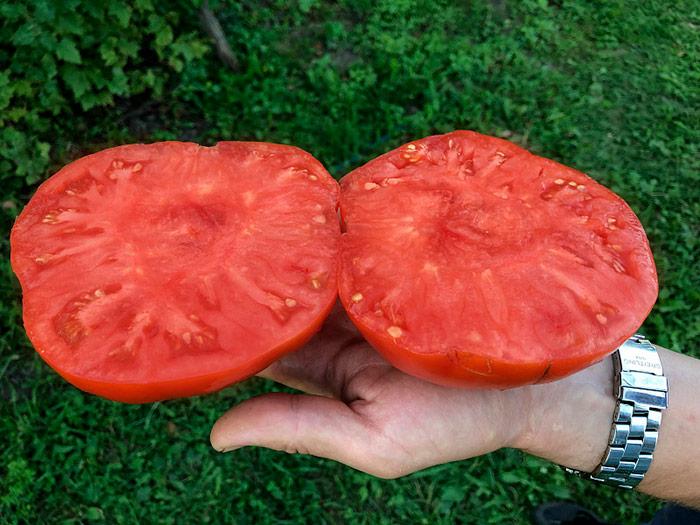 помидор в разрезе