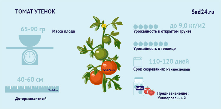 помидор утенок