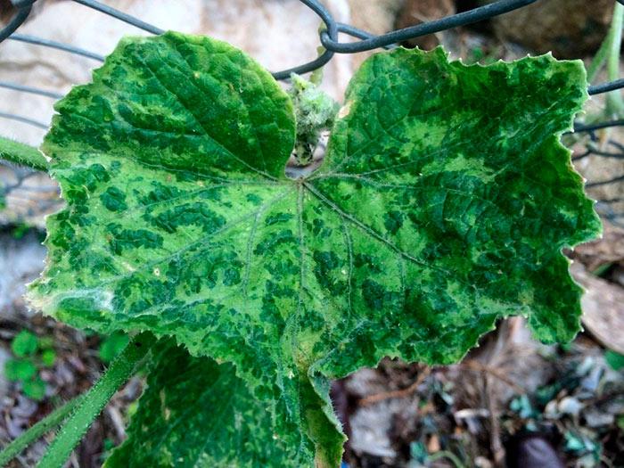 чем болеют растения
