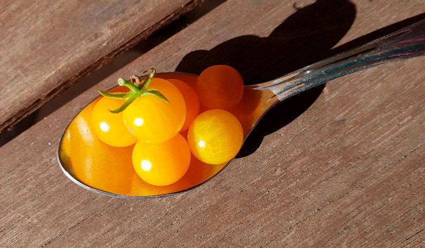 Томат вишня желтая черри характеристика и описание сорта
