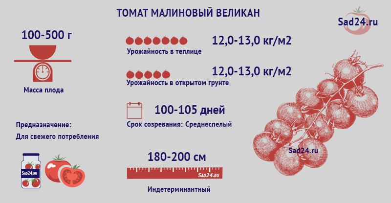 Малиновый великан - https://sad24.ru