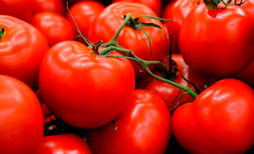 Описание сорта томата Лиза характеристика и урожайность