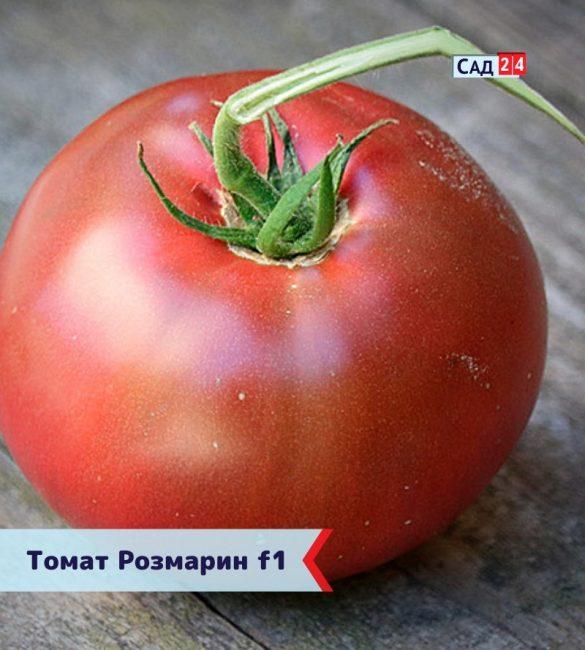 Нежный томат Розмарин (Розамарин F1)