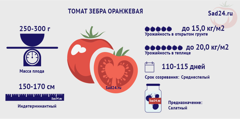 Зебра оранжевая - https://sad24.ru