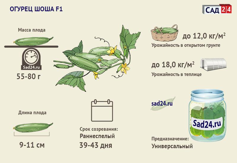 Шоша - https://sad24.ru