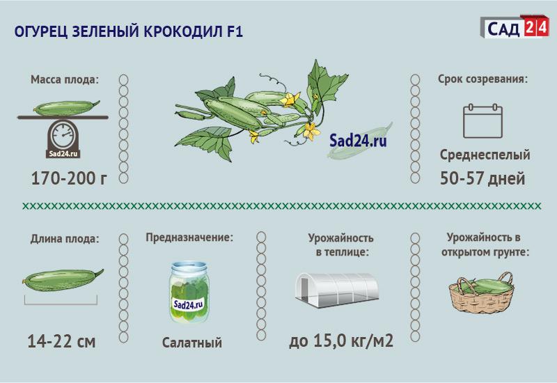 Зеленый крокодил F1 - https://sad24.ru