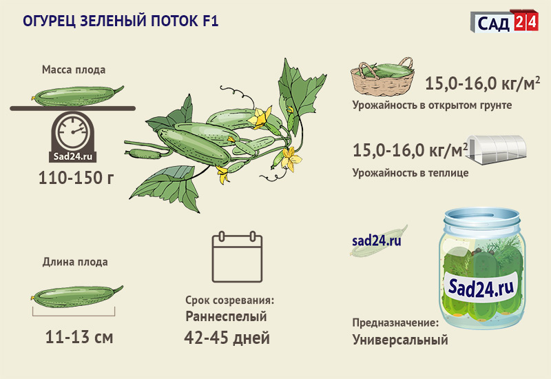 Зеленый поток F1 - https://sad24.ru