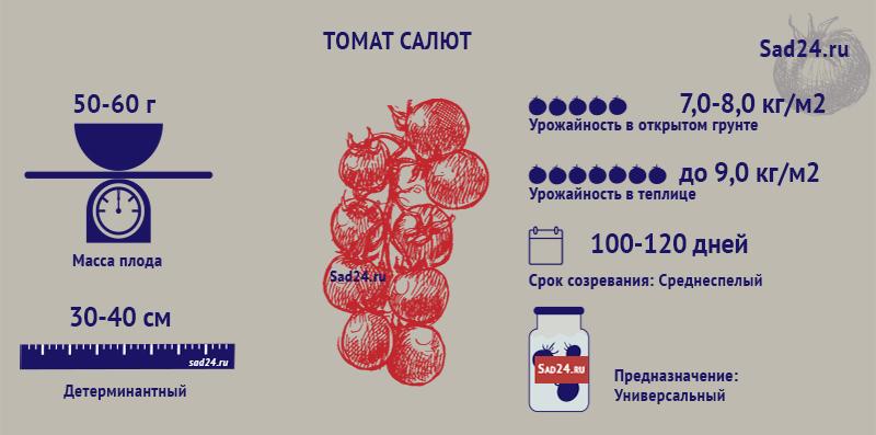 Салют - https://sad24.ru